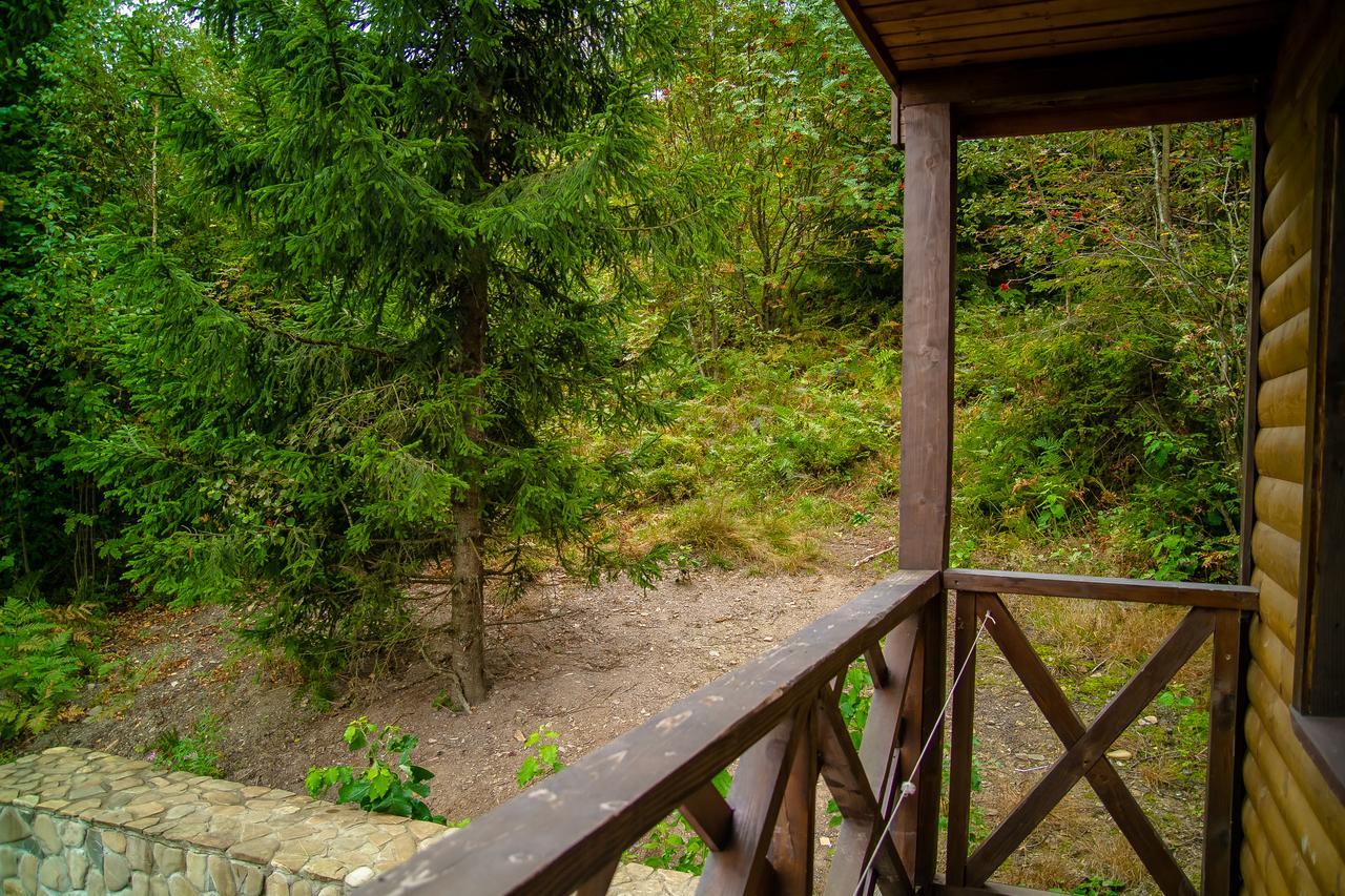 Східниця Під лісом фото